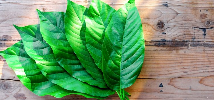 Create A Purchase Kratom You Could Be Proud Of
